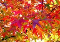 autumn-18051_640